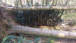 Outdoor Adventures: Bush Craft, Shelter Building
